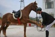 奔跑吧!马背上的乡村少年