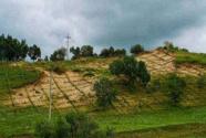 河北坝上草原生态修复建设成效显著