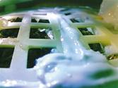 月球上的棉花种子发芽啦
