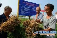 河南驻马店市:为花生产业腾飞发展插上翅膀
