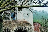"""长江流域有条""""烧柴带"""",珍稀植物也成了""""柴"""""""