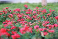 新疆维吾尔自治区呼图壁县:全域旅游全面开花