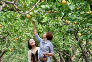 燕山深处红杏香甜