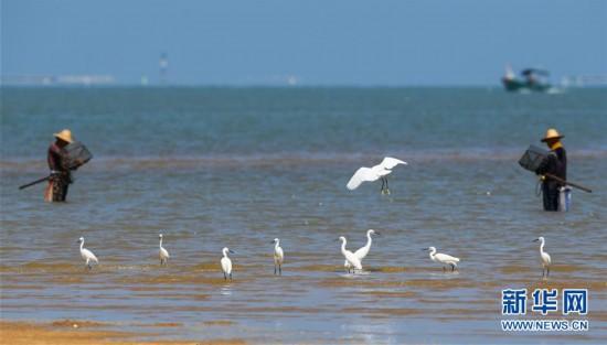 (环境)(5)海南儋州:光村银滩候鸟飞