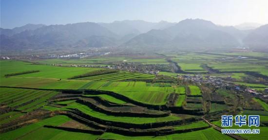 (美丽中国)(2)陕西长安:冬日小麦铺绿毯