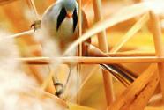 大兴新增21种珍稀野鸟
