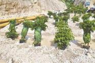 綠漆刷山、盆栽式復綠……揭開環保領域偽裝亂象