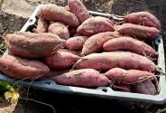 """拼多多""""抗疫助農""""上線:農戶兩小時賣一萬斤洋蔥"""