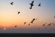 """江苏东台:为鸟让路,做好生态""""加减法"""""""