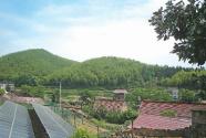 小竹子 大產業