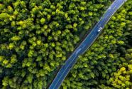 扎实推动国土绿化高质量发展